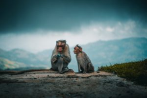 Photo of two monkeys on a hill in India by Ahmed Zayan on Unsplash